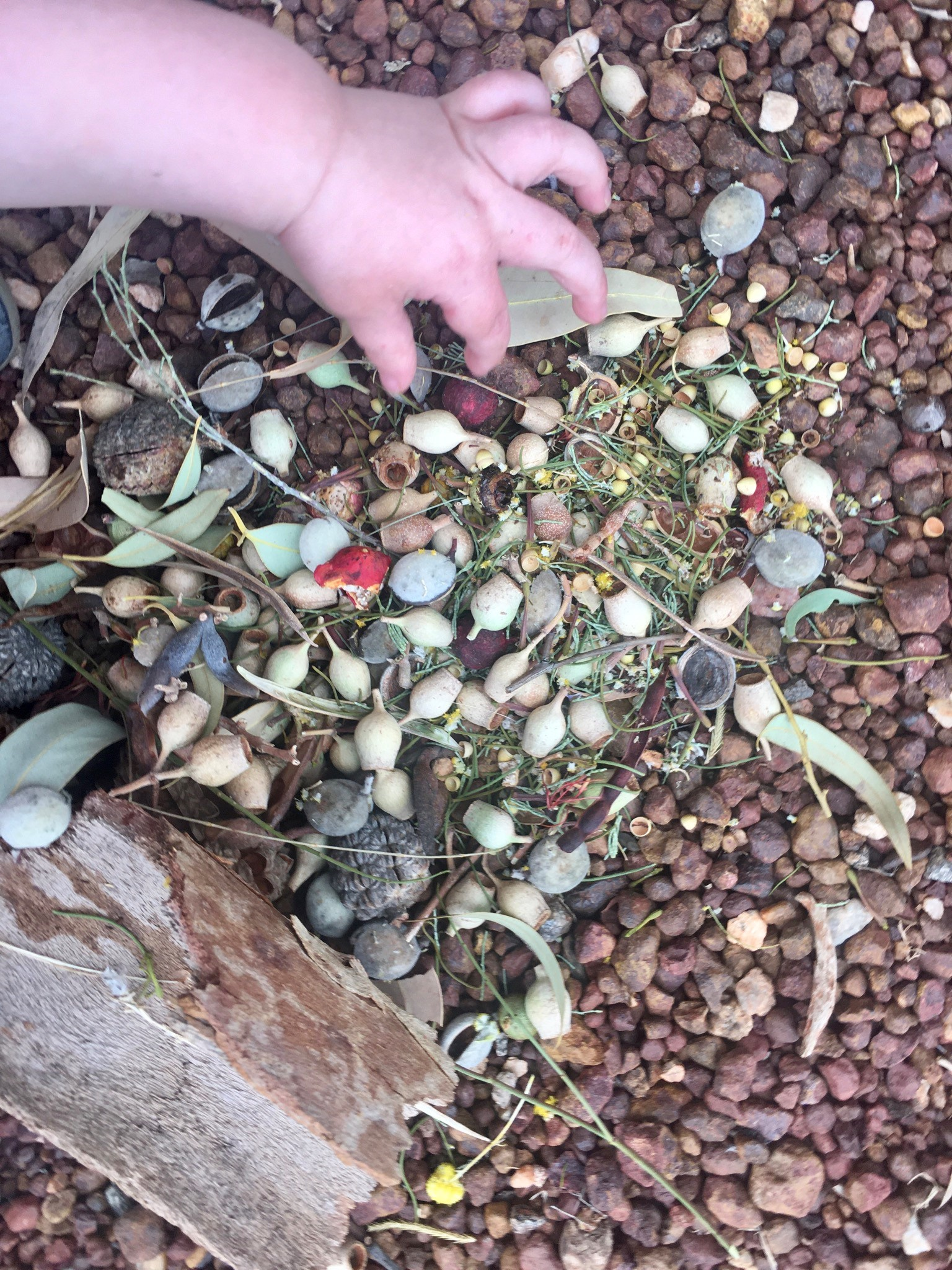 small hand picking up seeds on the ground.